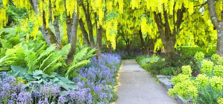 溫哥華植物園