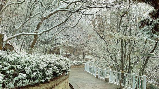 青島山公園