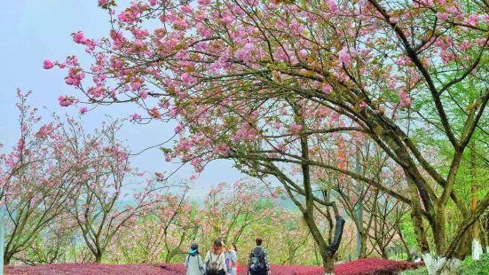 Chongqing Garden Expo Park