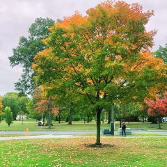 Oberlin College用戶圖片