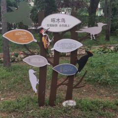 비둘기 공원 여행 사진