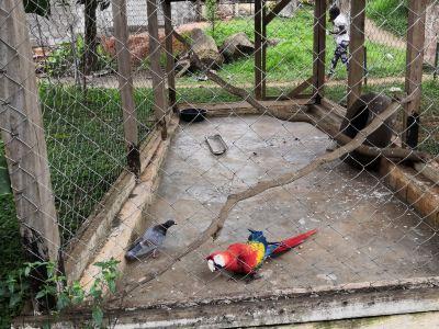 Mvog-Betsi Zoo
