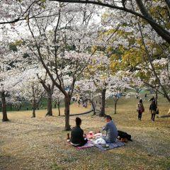 니시공원 여행 사진