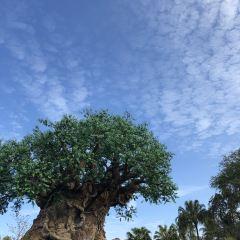 디즈니스 애니멀 킹덤 띰 파크 여행 사진
