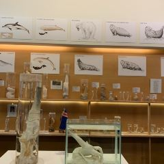 Icelandic Phallological Museum User Photo