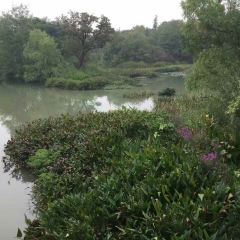 Xixi National Wetland Park User Photo