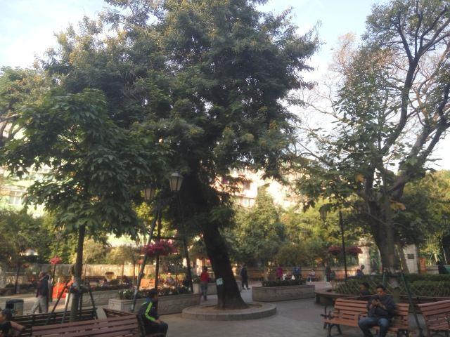 까모에스 정원