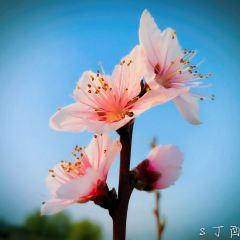 蟠桃山佛教文化景區用戶圖片