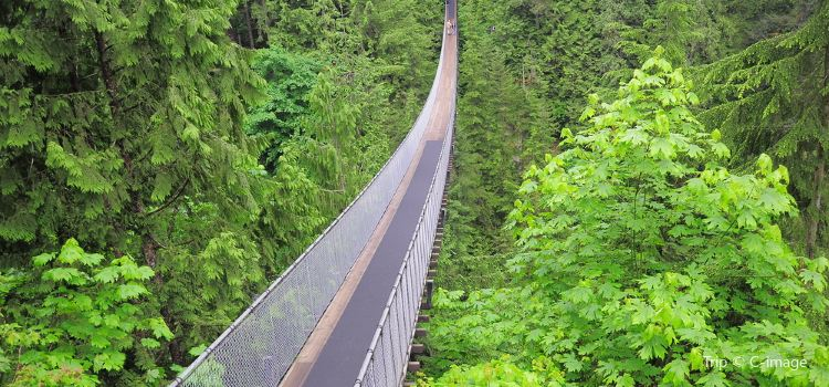 Capilano Suspension Bridge Park2