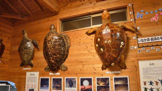 屋久島海龜博物館