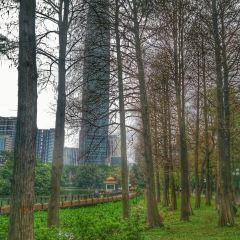 Lychee Park User Photo