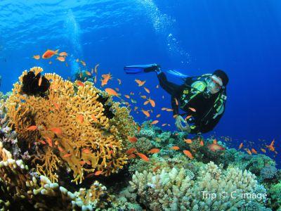 大堡礁潛水