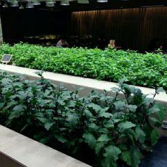 Wuchu (K11 Shopping Mall) User Photo