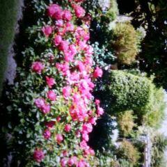 Jardin du Monastere de Cimiez User Photo