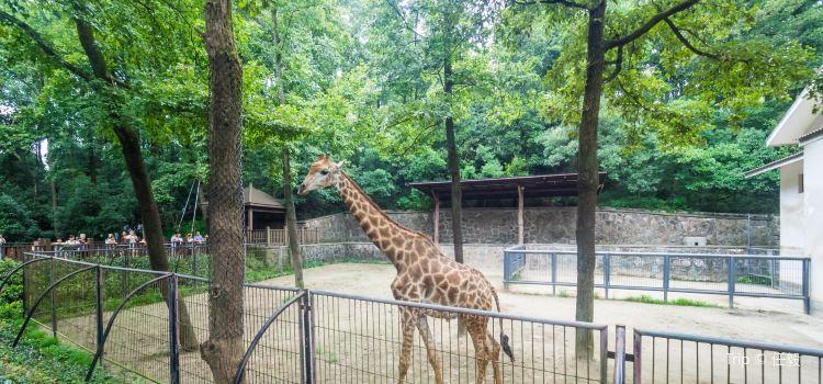 杭州動物園2