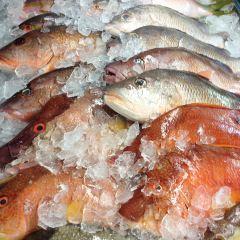 La CAMARONERA SEAFOOD JOINT & FISH MARKET User Photo