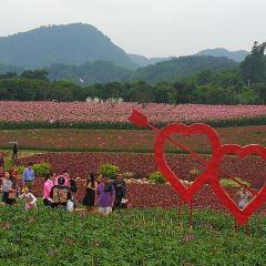 Shunan Huahai User Photo