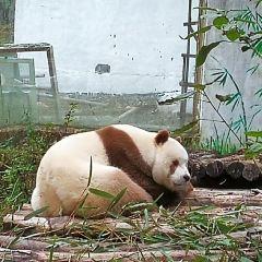 佛坪熊貓谷用戶圖片