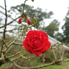 Queen Sirikit Botanic Garden User Photo