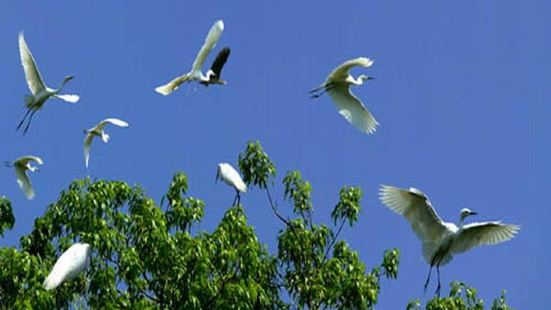 河口村鷺鳥棲息地