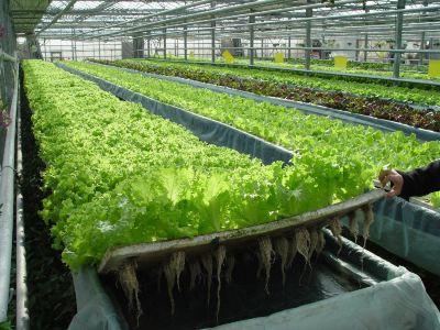 哈爾濱北方現代都市農業示範園