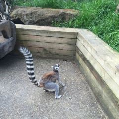 London Zoo User Photo
