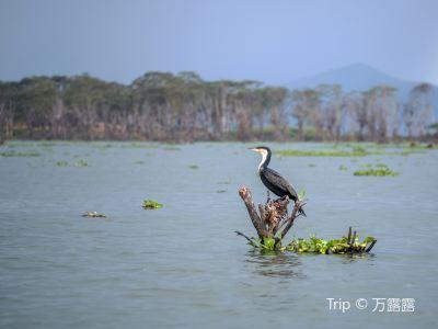 Naivasha Boating