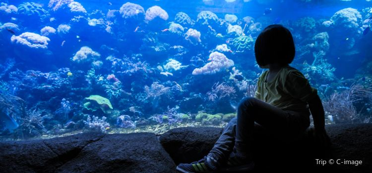 칭다오 해저세계/언더워터월드2