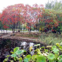 Zhangbaidao Forest Park User Photo