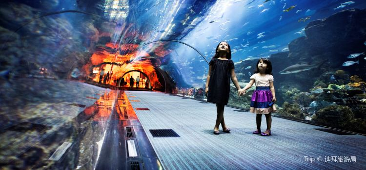 Dubai Aquarium and Underwater Zoo3