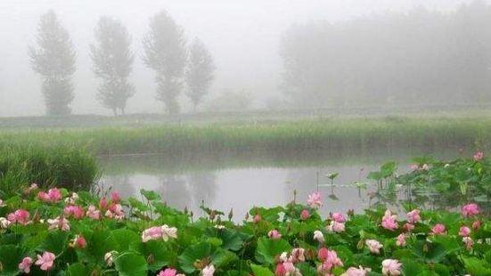 蓮花泡風景區