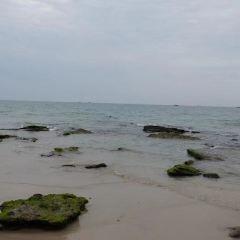 오채 해변 여행 사진