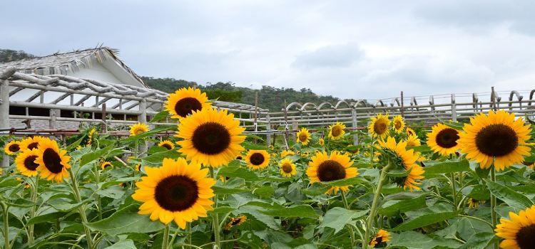 Dan Ying Agricultural Ecological Park1