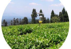 最新公示!四川省十大最美茶鄉初評出爐!來看看有沒有你家鄉!
