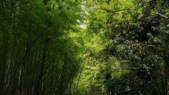 齊山植物公園