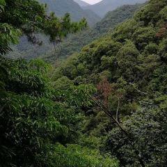 千島湖森林氧吧用戶圖片