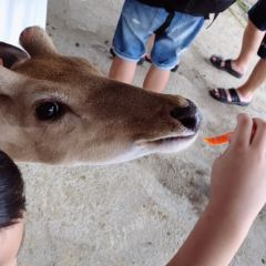 Paradise of Deer User Photo