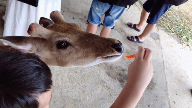 Paradise of Deer