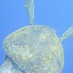 婆羅愛潛潛水中心用戶圖片