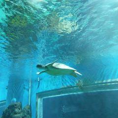 Nanchong Polar Ocean World User Photo
