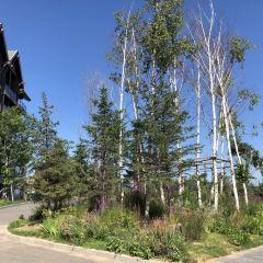 万科松花湖國際度假區用戶圖片