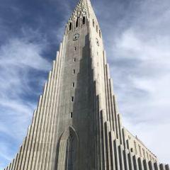Reykjavik Whale Watching用戶圖片