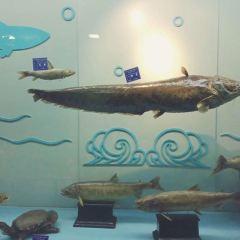 興凱湖博物館用戶圖片