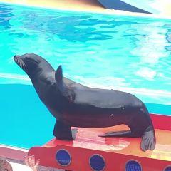 SeaWorld Orlando User Photo