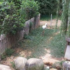 Wan Bird Park User Photo