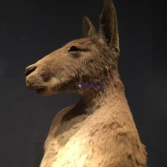South Australian Museum User Photo