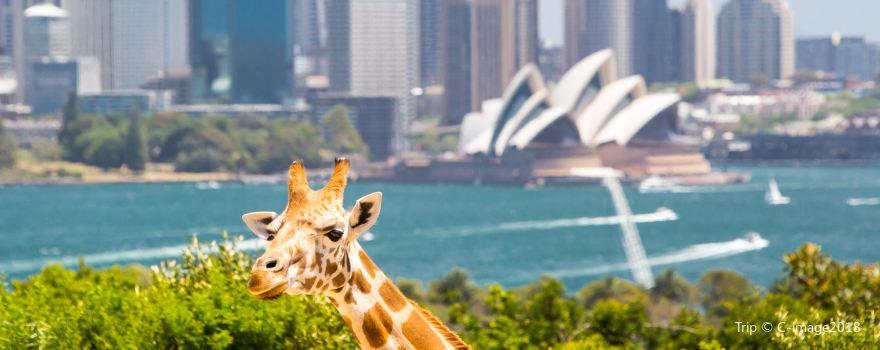 Wildlife Paradises in Sydney