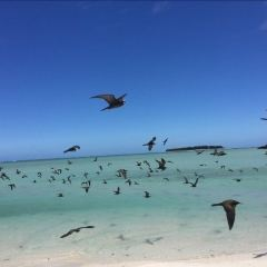 Ile aux Cocos User Photo