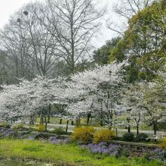 渤公島生態公園のユーザー投稿写真