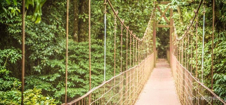 Monteverde Cloud Forest Biological Preserve3